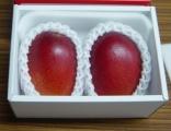 天草マンゴー 4L(2個入り)