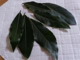 月桂樹の葉(フレッシュ)